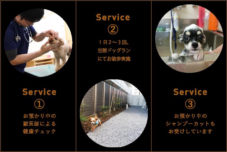 ペットホテルサービスの流れ|獣医師による健康チェック、当院ドッグランにてお散歩実施、お預かり中のトリミングもお受けいたします。