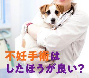 不妊手術はしたほうが良い?画像